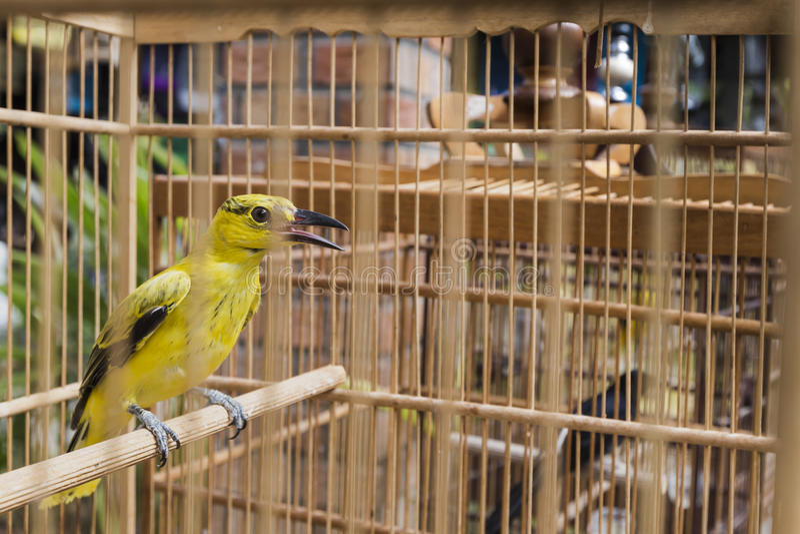 oiseaux color s vendre au march d 39 oiseau yogyakarta java indon sie image stock image du. Black Bedroom Furniture Sets. Home Design Ideas