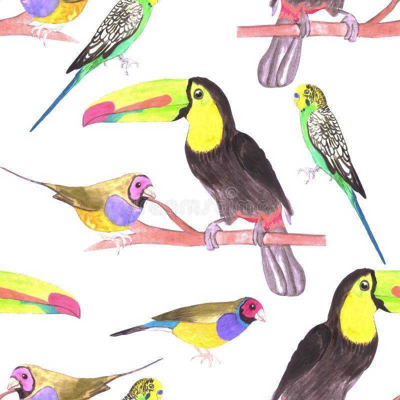 Oiseaux colorés d'animal familier étés perché sur un fond sans couture d'aquarelle de branche illustration de vecteur
