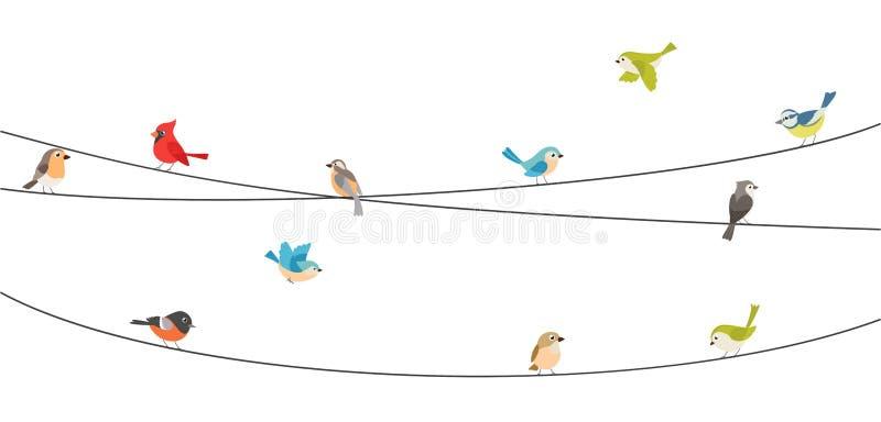 Oiseaux colorés se reposant sur le fil d'isolement sur le blanc illustration stock