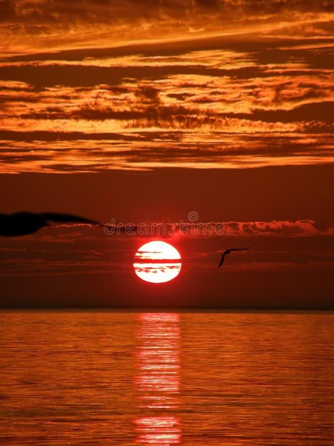 Oiseaux, coucher du soleil, mer 1 photographie stock libre de droits