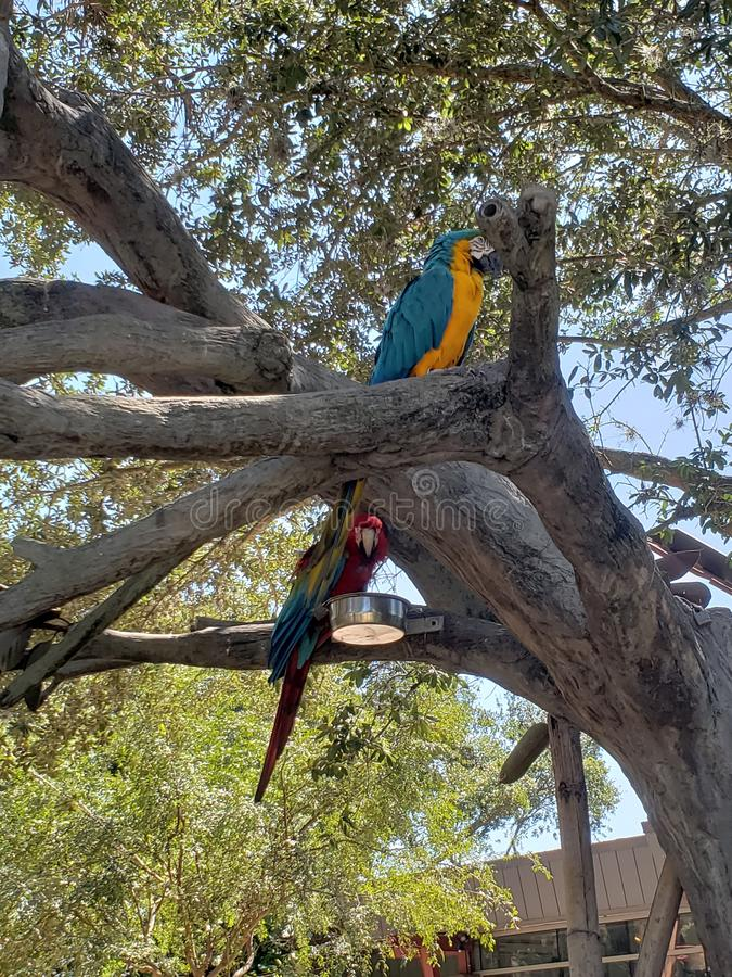 Oiseaux d'amour et un arbre photo stock