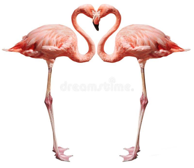 Oiseaux d'amour sur le blanc photos libres de droits