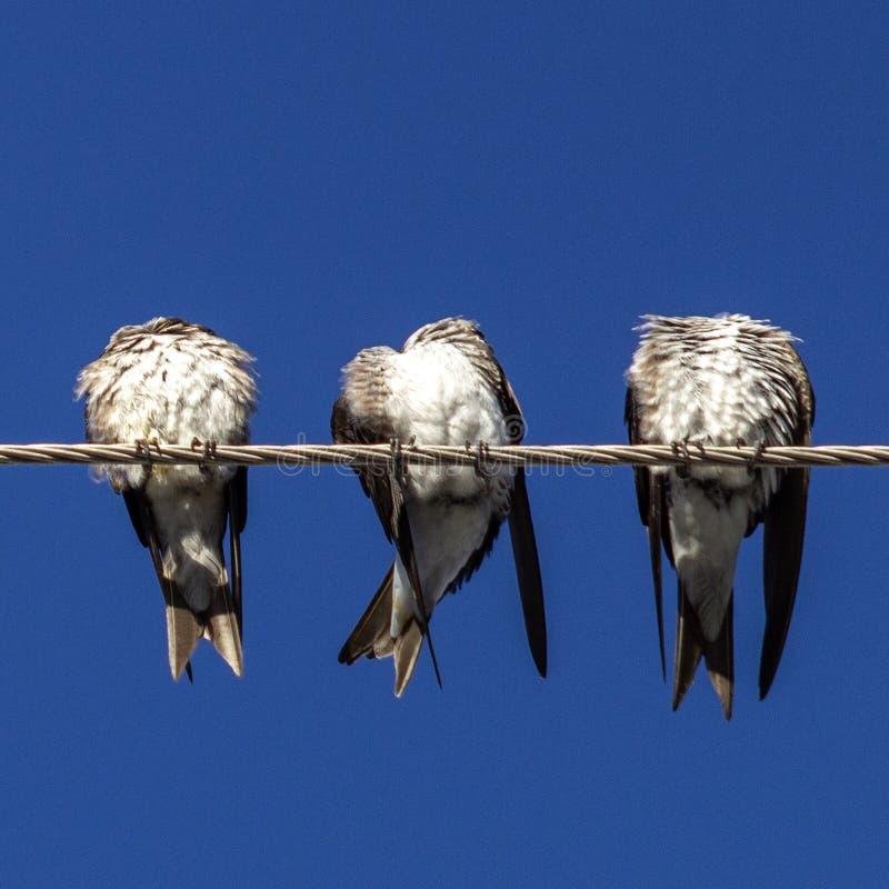 Oiseaux d'antenne image libre de droits