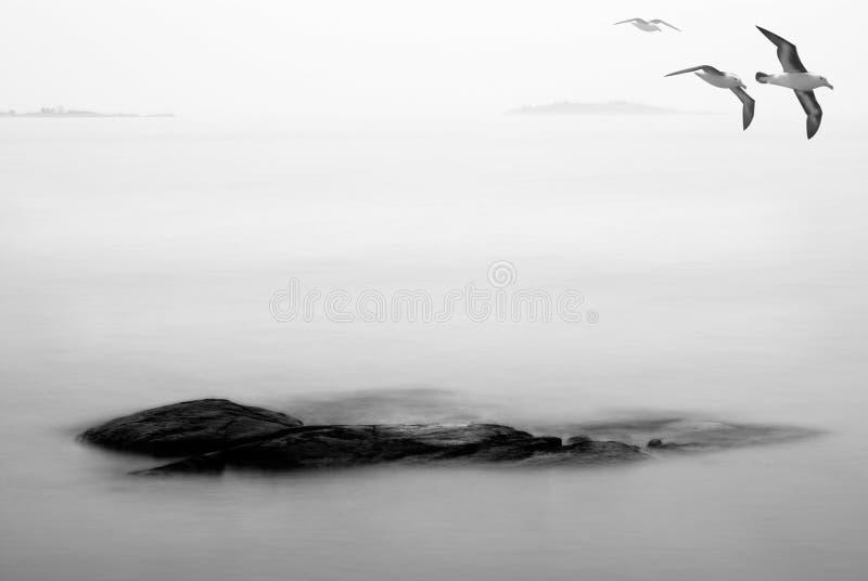 Oiseaux d'automne photographie stock