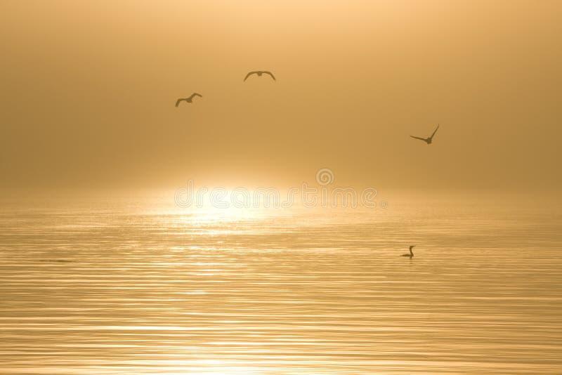 Oiseaux dans l'eau à l'aube photo stock