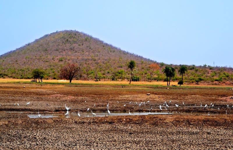 Oiseaux dans la beauté et le paysage de nature d'étang image libre de droits