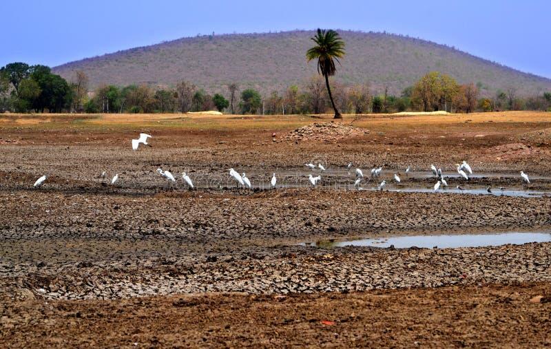 Oiseaux dans la beauté et le paysage de nature d'étang photo stock