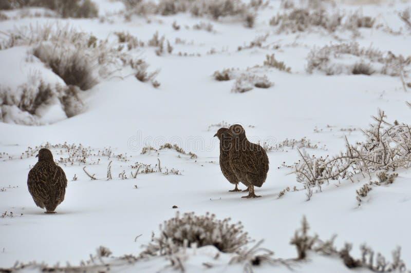 Oiseaux dans la neige images libres de droits