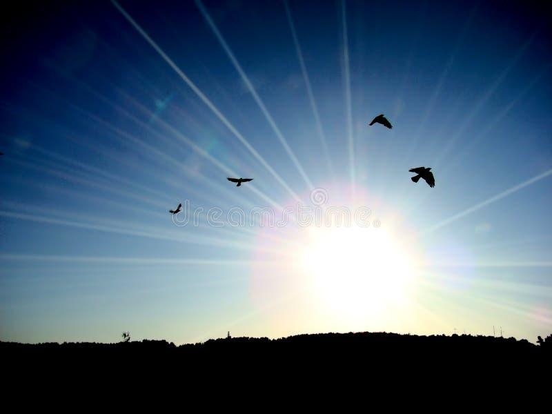 Oiseaux dans le ciel images stock
