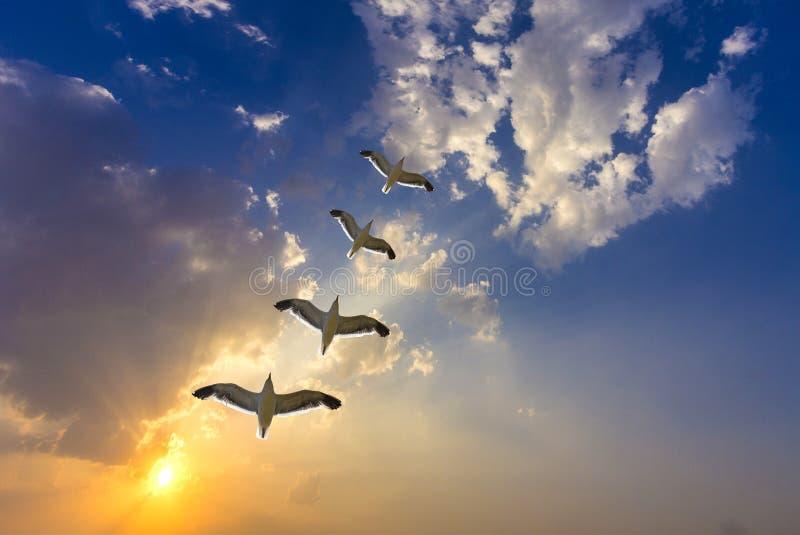 Oiseaux dans le coucher du soleil d'or spectaculaire avec des nuages photos stock