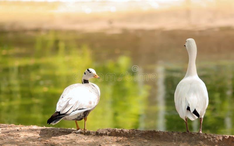 Oiseaux dans le jardin zoologique images stock