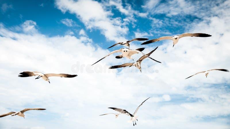 Oiseaux dans le paradis photos stock