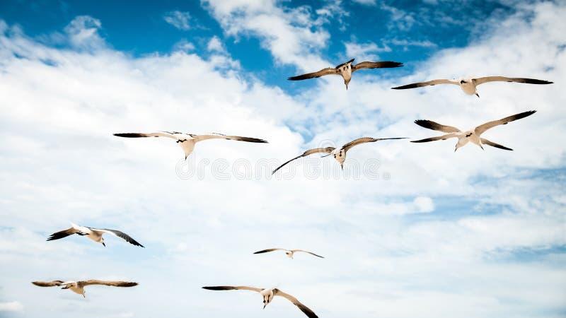 Oiseaux dans le paradis photo libre de droits