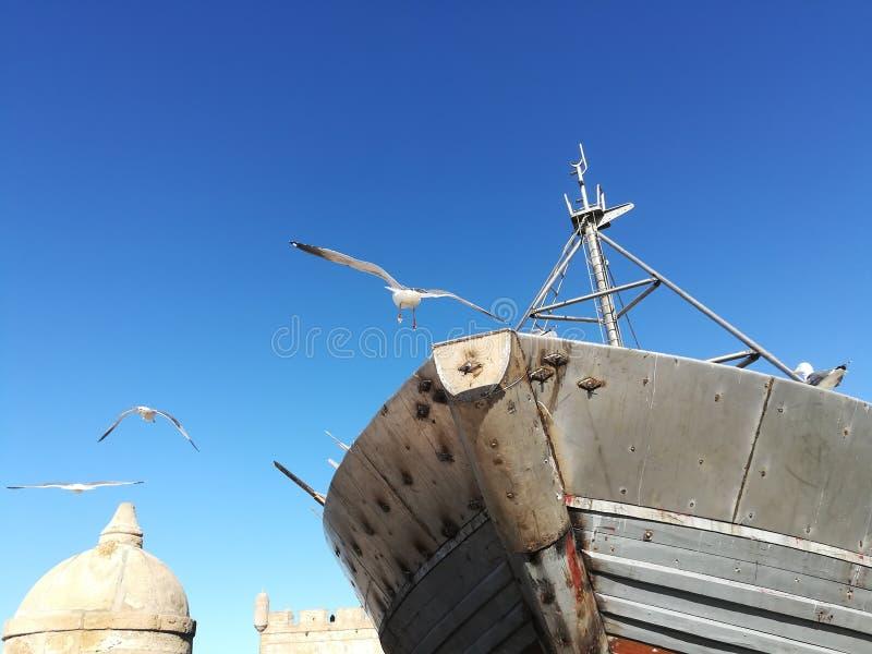 Oiseaux dans le port photos stock