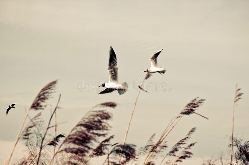 Oiseaux dans le vent photo stock