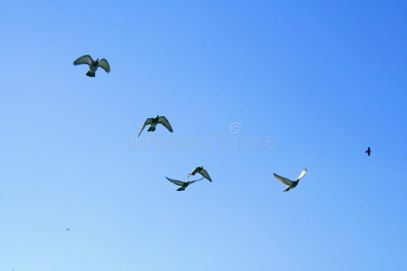Oiseaux dans un ciel bleu images stock