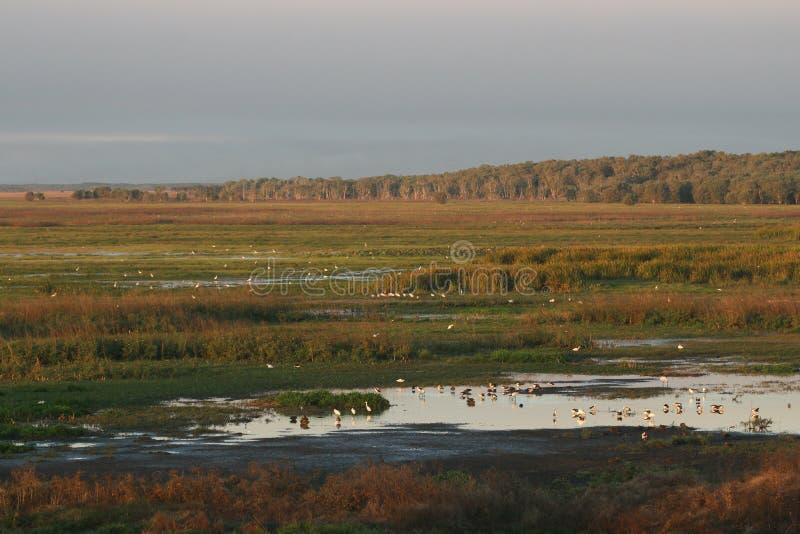 Oiseaux dans une zone humide naturelle, barrage de Fogg photographie stock
