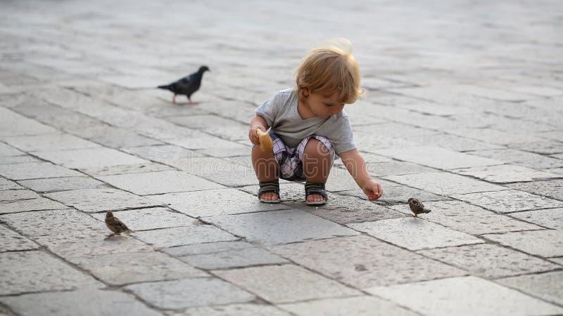 Oiseaux de alimentation de bébé garçon photos stock