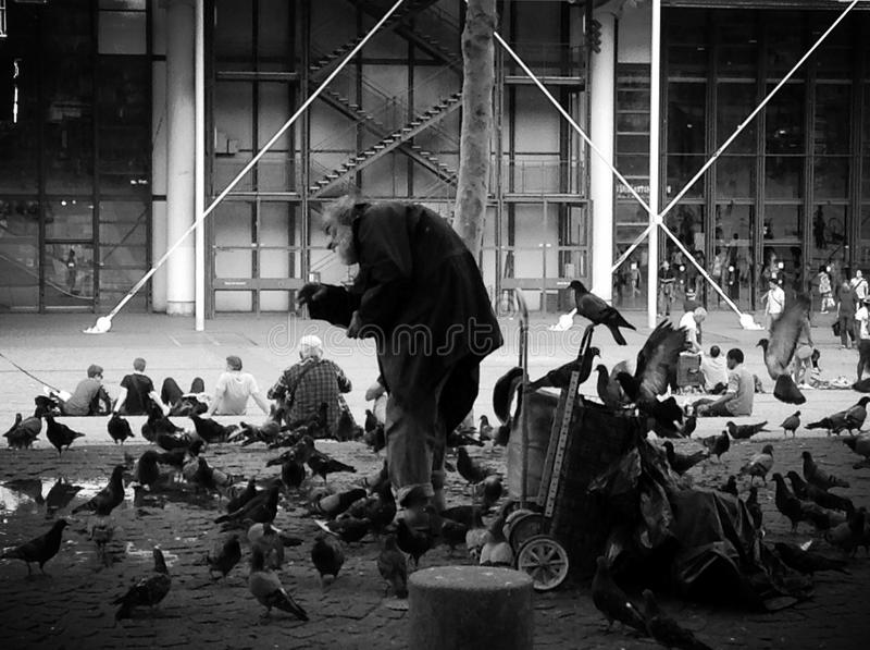Oiseaux de alimentation de vieil homme à Paris photos libres de droits