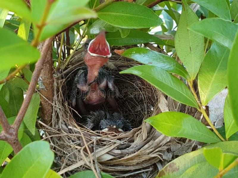 Oiseaux de bébé juste soutenus dans la forêt images stock