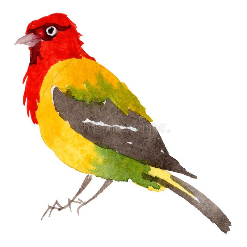 Oiseaux de ciel du paradis dans une faune par style d'aquarelle d'isolement illustration de vecteur