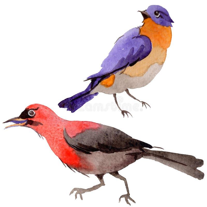 Oiseaux de ciel du paradis dans une faune par style d'aquarelle d'isolement illustration stock