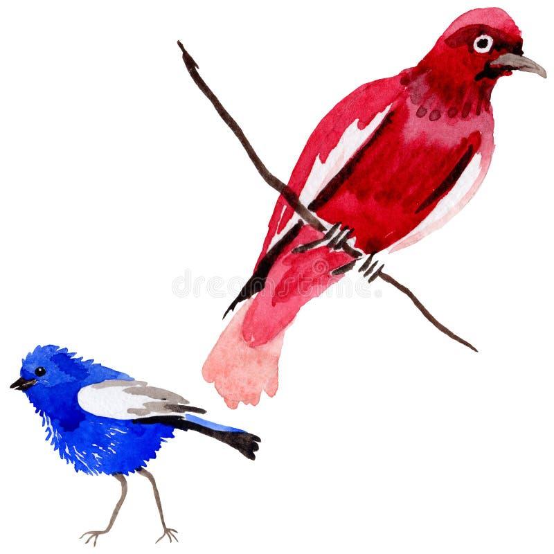 Oiseaux de ciel du paradis dans une faune par style d'aquarelle d'isolement illustration libre de droits