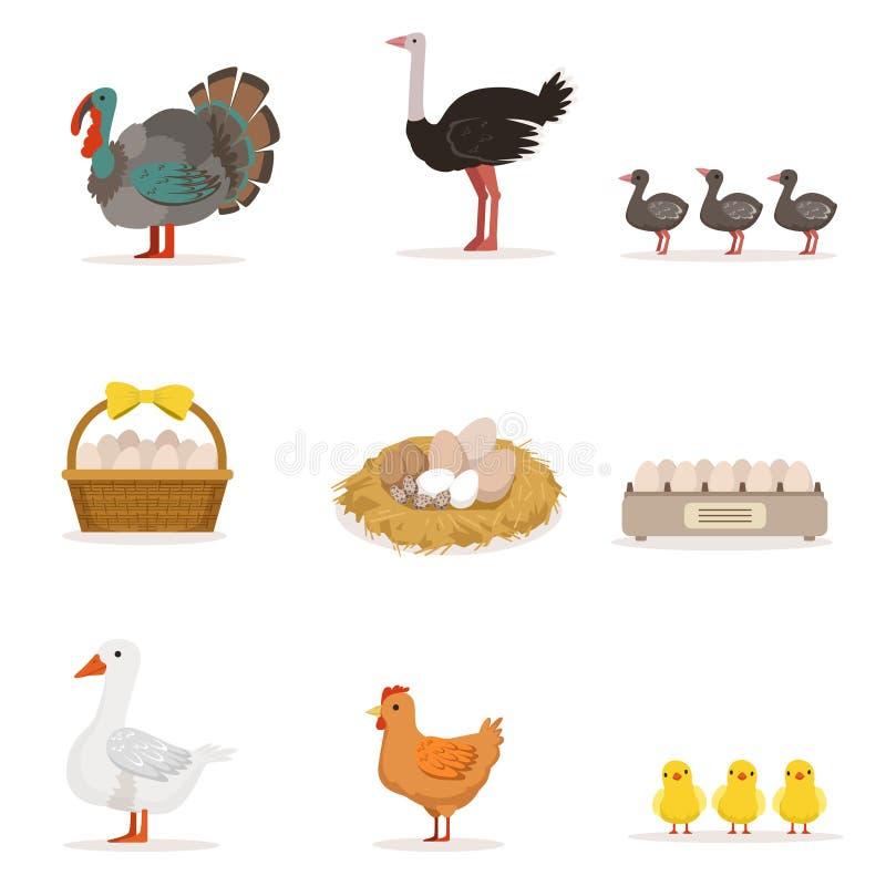 Oiseaux de ferme développés pour la viande et pour pondre des oeufs, ensemble d'agriculture biologique des illustrations de vecte illustration stock