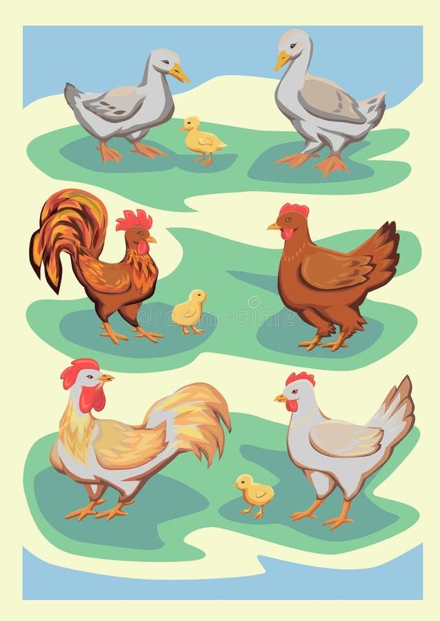 Oiseaux de ferme de vecteur illustration de vecteur