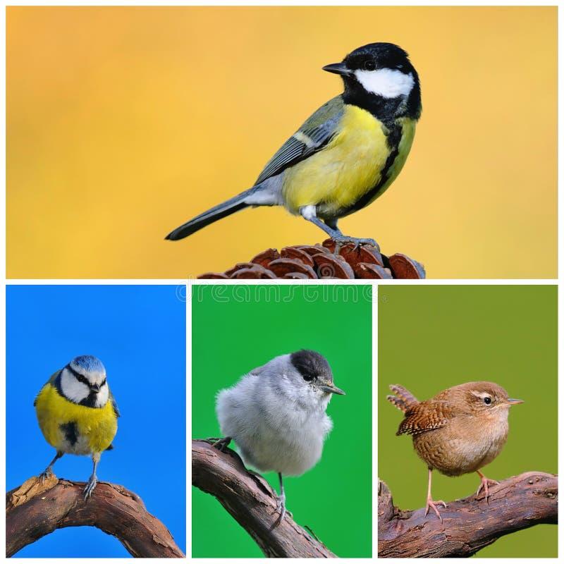 Oiseaux de jardin. photographie stock