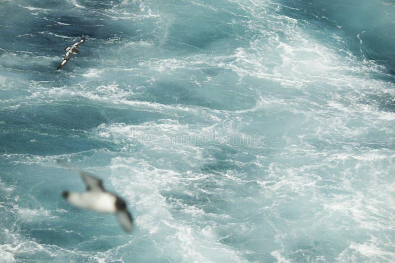 Oiseaux de l'Antarctique volant contre l'océan pour pêcher quelques poissons photo stock