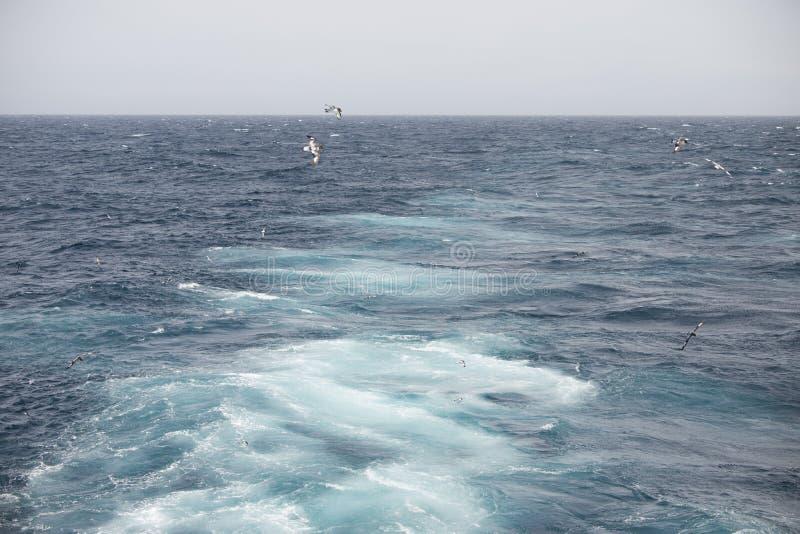 Oiseaux de l'Antarctique volant contre l'océan pour pêcher quelques poissons photo libre de droits
