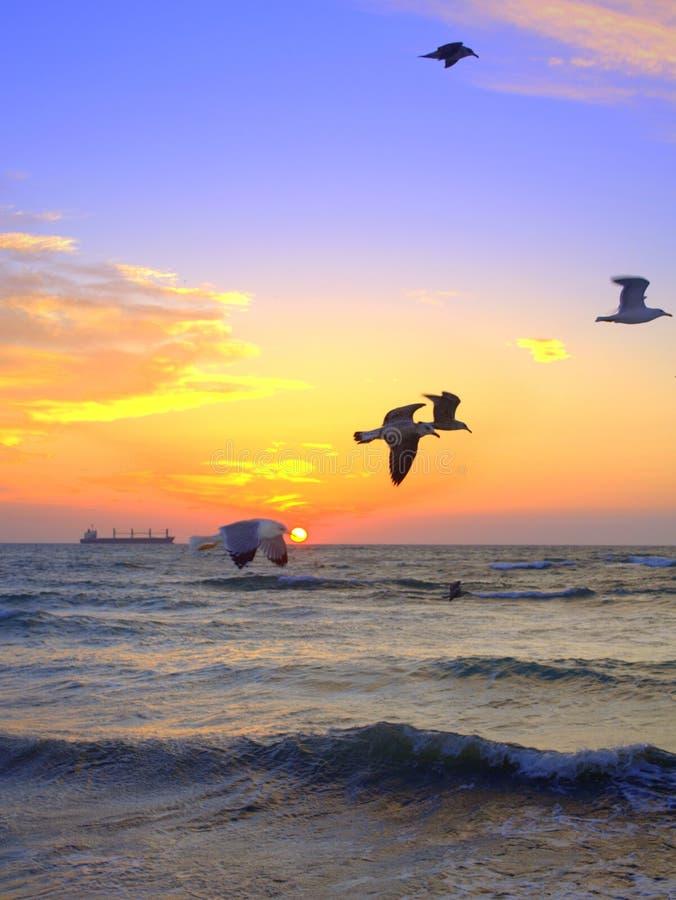 Oiseaux de lever de soleil et de vol au-dessus de la mer photo stock