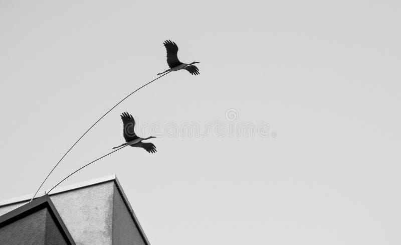 Oiseaux de limite photographie stock libre de droits