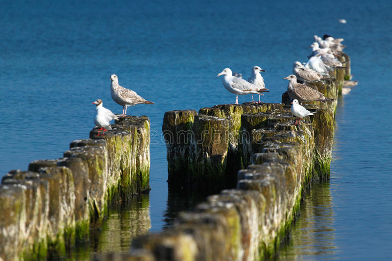 Oiseaux de mer photos libres de droits