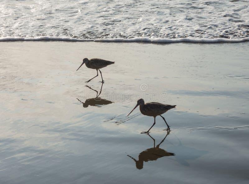 Oiseaux de mer sur la plage photos stock