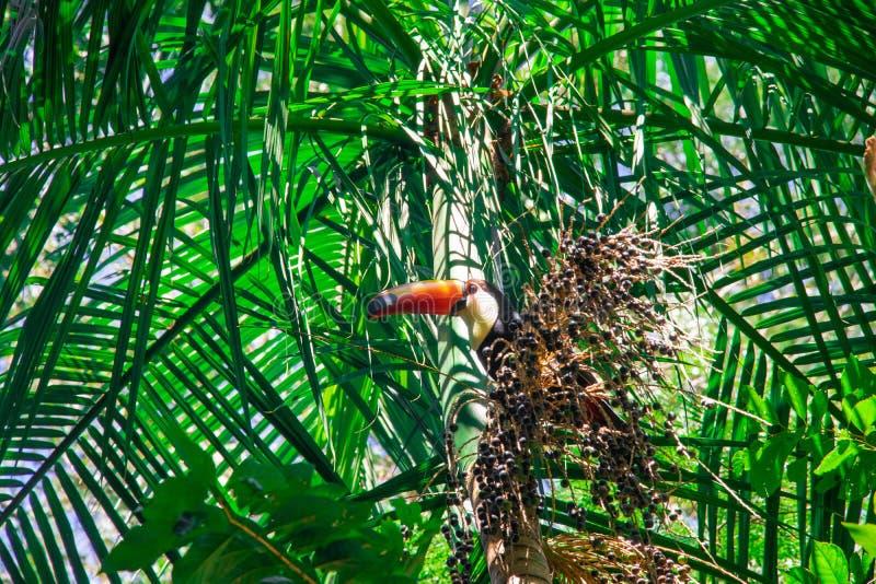Oiseaux de Parque DAS Aves photographie stock
