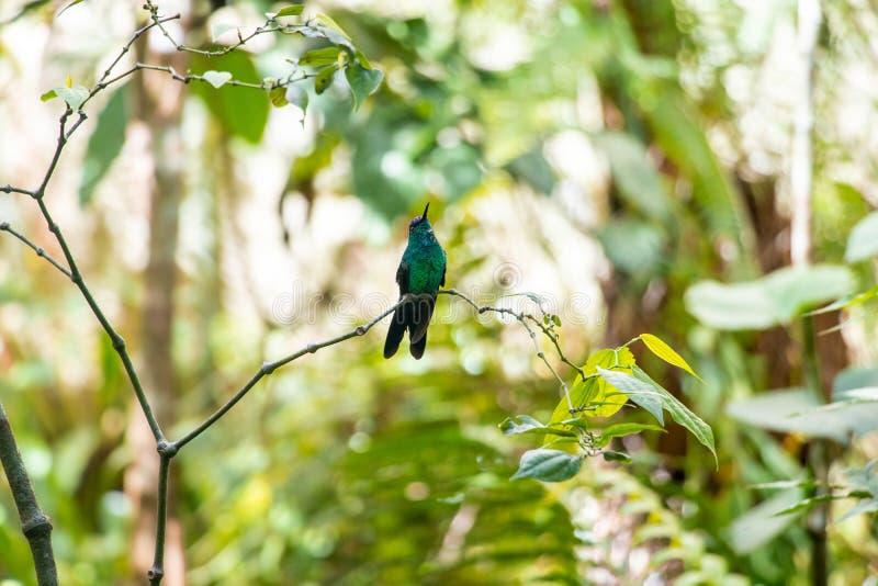 Oiseaux de Parque DAS Aves photographie stock libre de droits
