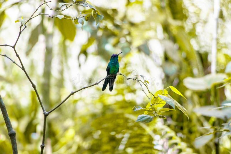 Oiseaux de Parque DAS Aves images libres de droits