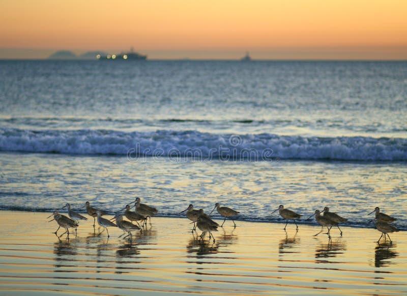 Oiseaux de plage images libres de droits