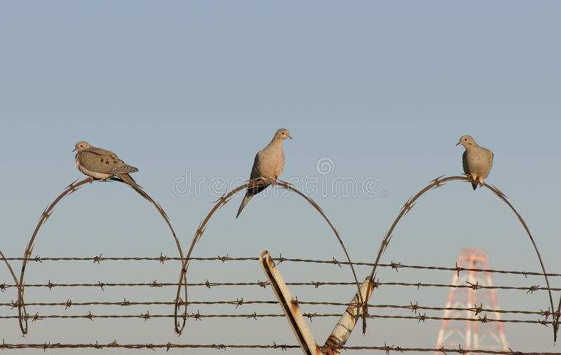 Oiseaux de prison photo stock