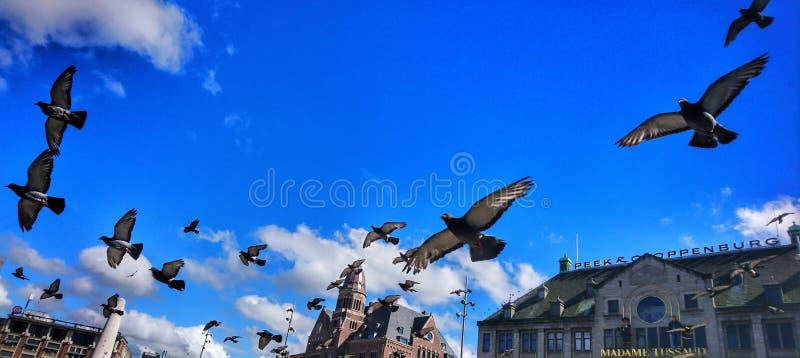 Oiseaux de vol photographie stock libre de droits