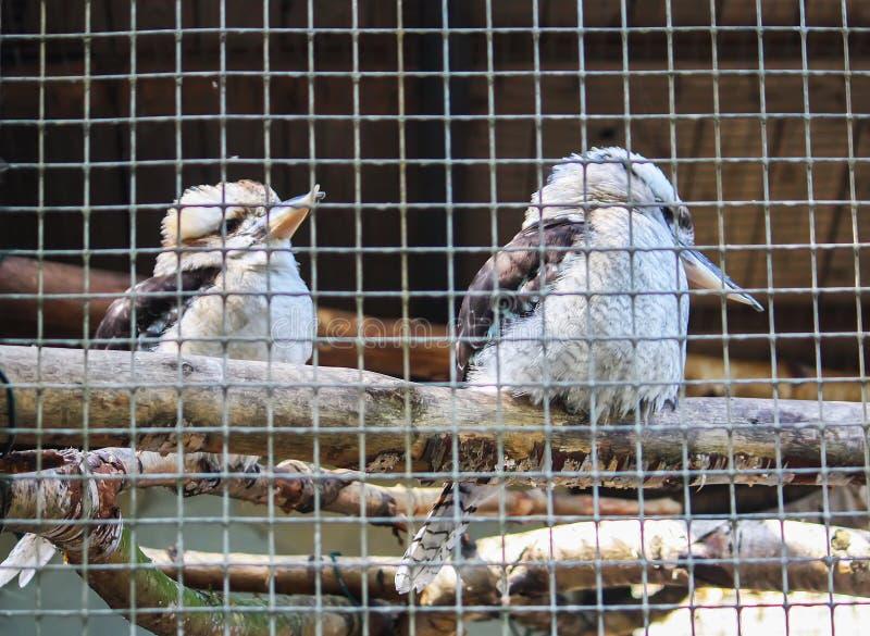 Oiseaux derrière la barre dans le jardin zoologique photo libre de droits