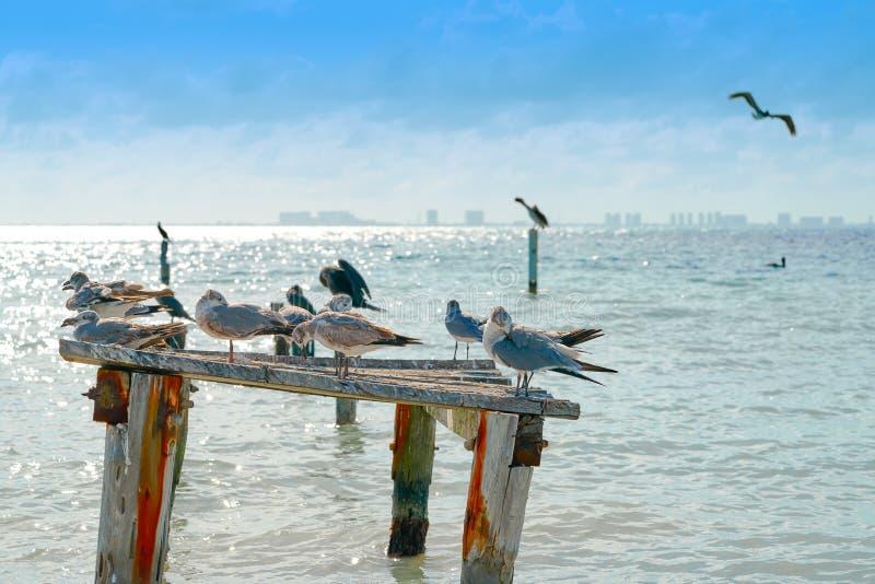 Oiseaux des Caraïbes de plage d'île d'Isla Mujeres images stock
