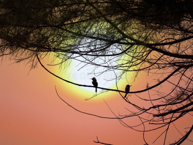 Oiseaux divorcés ou séparés photos stock