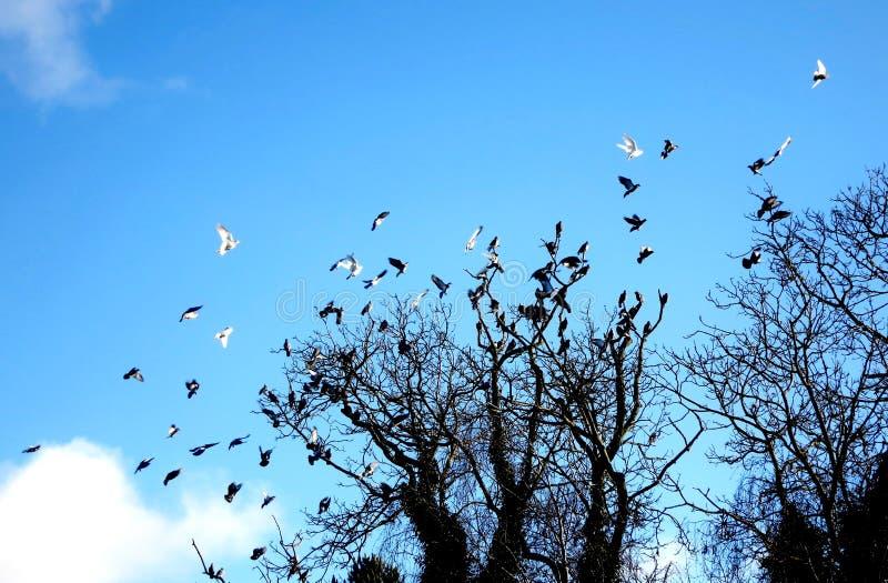 Oiseaux effectuant le vol image stock