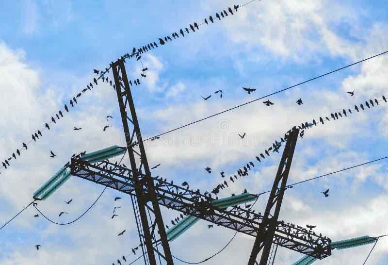 Oiseaux en automne images libres de droits