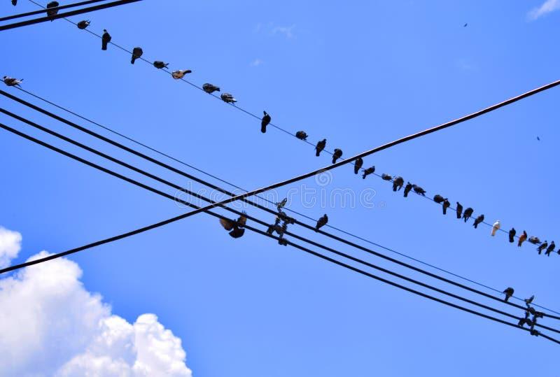 Oiseaux en câbles de l'électricité photos stock