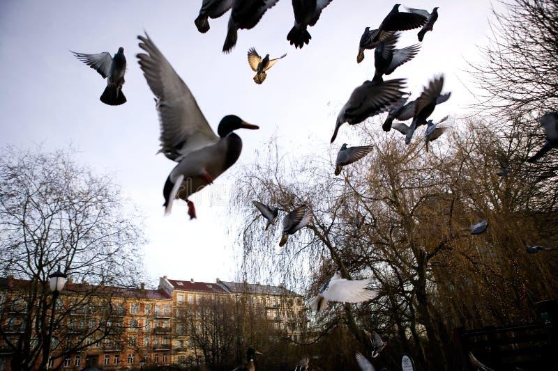 Oiseaux en vol Sihlouette photographie stock