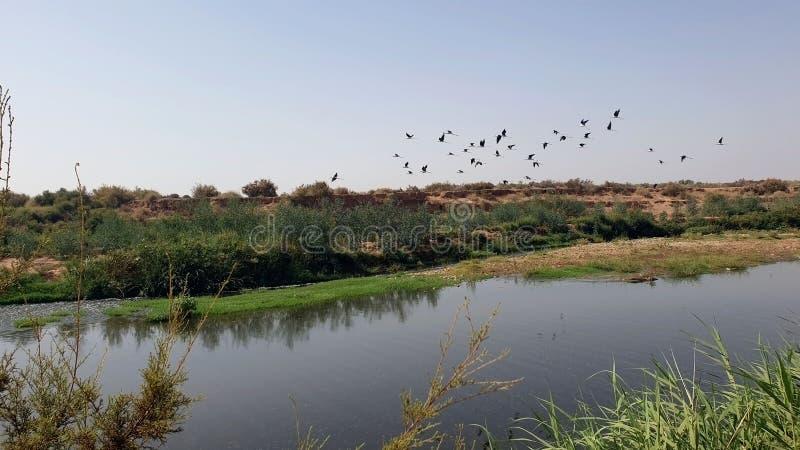 Oiseaux et eau photo stock